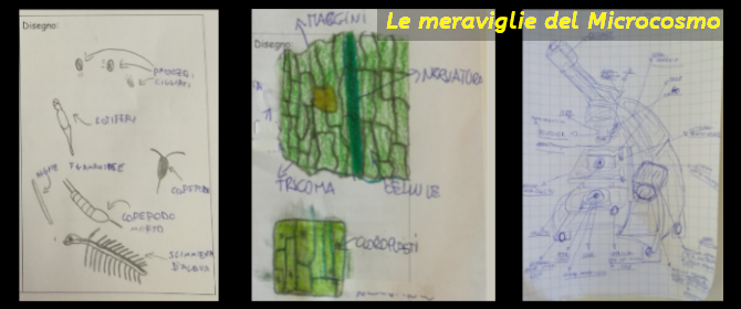 Le meraviglie del Microcosmo