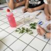 Estrazione della clorofilla e cromatografia su carta dei pigmenti fotosintetici di Carmela Taurisano